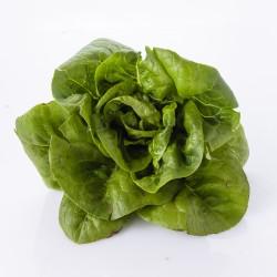 Salades 1 Unité